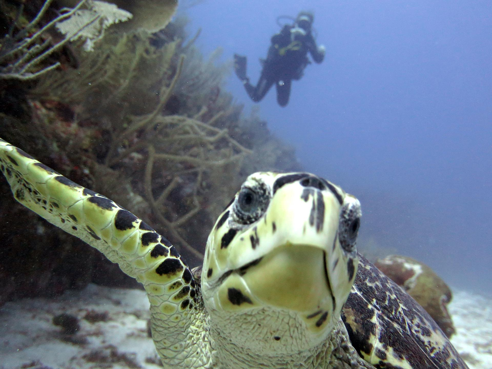 Diving in Playa del Carmen Reef
