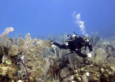 © Nina Moysi Photography pura-vida-diving-playa-del-carmen-riviera-maya-cozumel-mexico-buceo-mejor-padi022