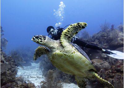 © Nina Moysi Photography pura-vida-diving-playa-del-carmen-riviera-maya-cozumel-mexico-buceo-mejor-padi051