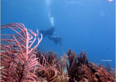 © Nina Moysi Photography pura-vida-diving-playa-del-carmen010 copy
