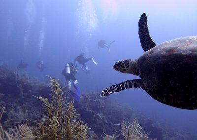 © Nina Moysi Photography pura-vida-diving-playa-del-carmen-riviera-maya-cozumel-mexico-buceo-mejor-padi012