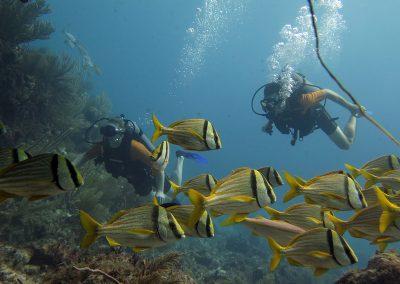 © Nina Moysi Photography pura-vida-diving-playa-del-carmen-riviera-maya-cozumel-mexico-buceo-mejor-padi065
